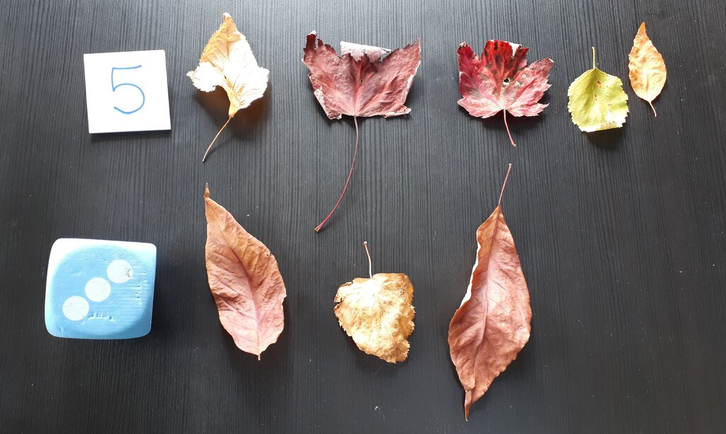 add in some math learning and count leaves