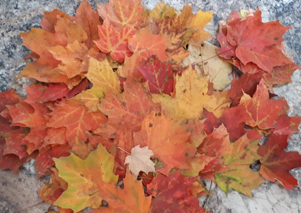 the first things to do in the fall with leaves is to collect them