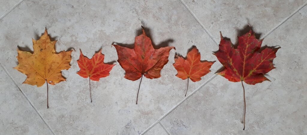 an easy math thing to do in the fall with leaves is to make patterns